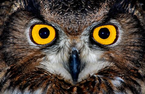 about owls she s got bette davis eyes
