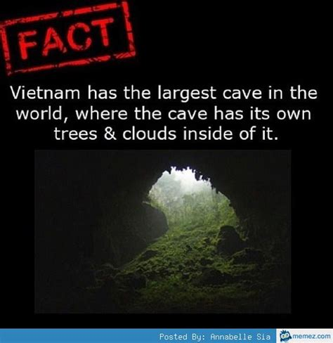 Interesting Memes - interesting facts memes com