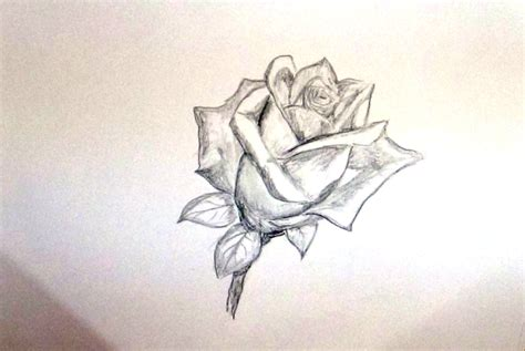 Sketches Flowers by How To Draw A Flower Sketch A Flower For