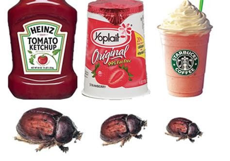 food coloring bugs 14 things probably do not want to about their