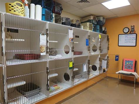 cat room frijole in cat room 1 sundays at the shelter
