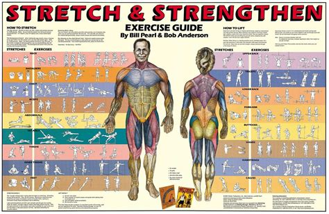dumbbell exercises diagrams dumbbell exercises diagrams www pixshark images