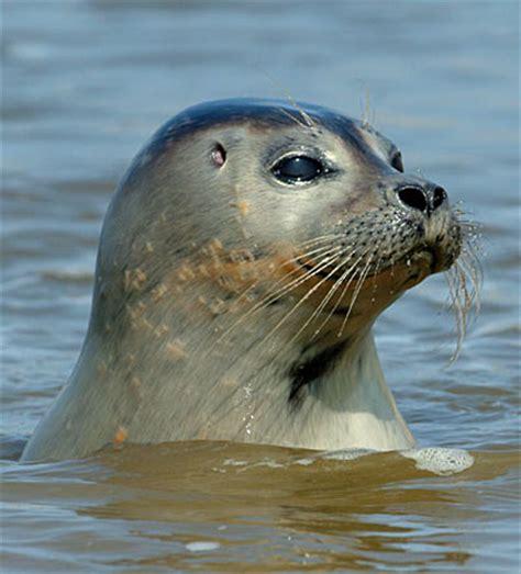 boot zeehond ameland zeehond