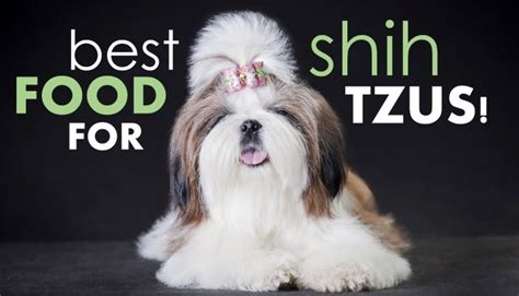 recommended food for shih tzu best food for shih tzus how to the shih herepup