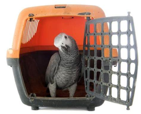 airline bird carriers preparing a bird carrier for airline travel birdsupplies