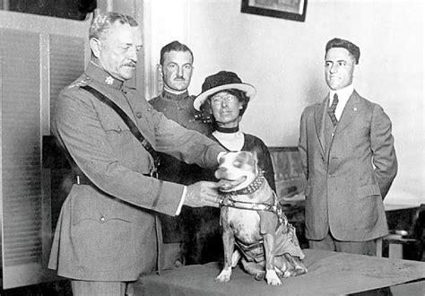 Ww1 Sergeant Stubby Sergeant Stubby Wwi War Australian Lover