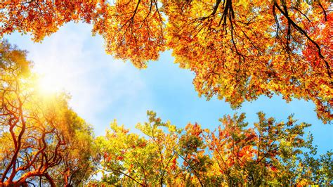 new fall colors 4 best destinations to see fall foliage that aren t new