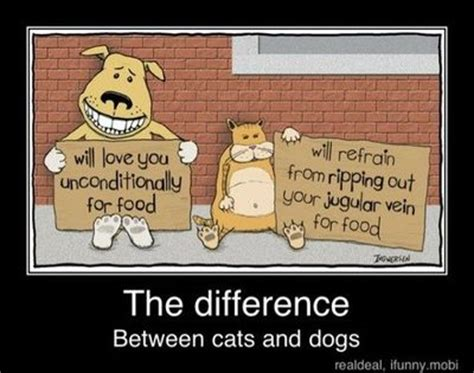 difference between cats and dogs the difference between cats and dogs things juxtapost