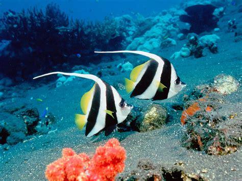 wallpaper keindahan alam bawah laut foto foto keindahan alam bawah laut