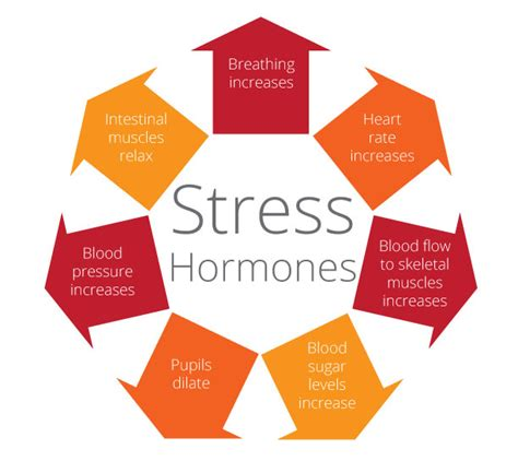 cortisol  stress hormone exercise  reduce stress