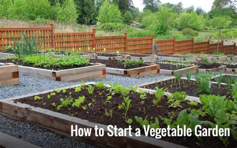How To Start A Vegetable Garden Home Grow Your Own Vegetable Garden Starter Plants