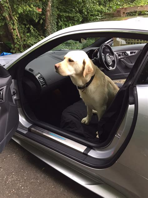 labrador rubber st products petgear front seat cover review