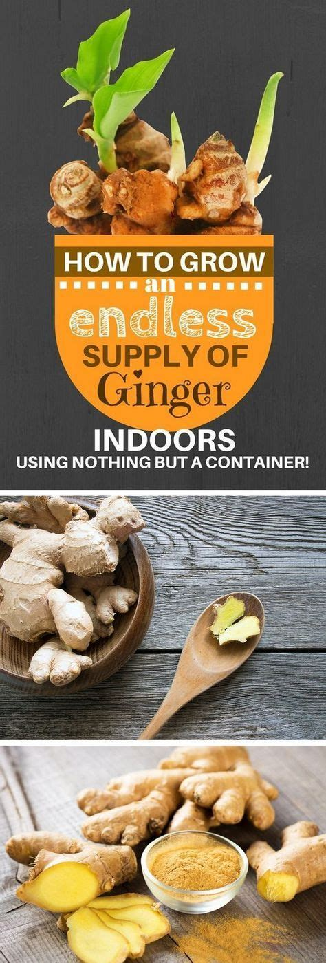 grow  endless supply  ginger indoors