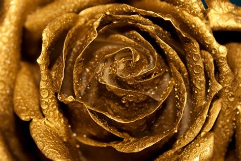 Golden Home Decor by Golden Rose Photo Digital Download Fine By