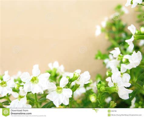 white flowers border stock photo image 693790