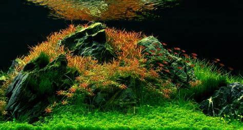 aga aquascape aga aquascape winners 2012