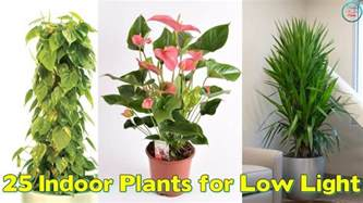 Plants That Need No Light by 25 Indoor Plants For Low Light Youtube