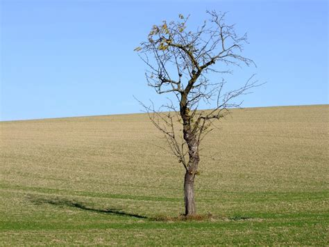 der alte apfelbaum 3809 der alte apfelbaum der alte apfelbaum b cher gebraucht