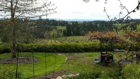 Garden Vineyards View From Paito Picture Of Garden Vineyards Hillsboro
