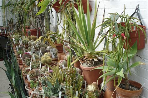 succulent house succulent house plants flickr photo