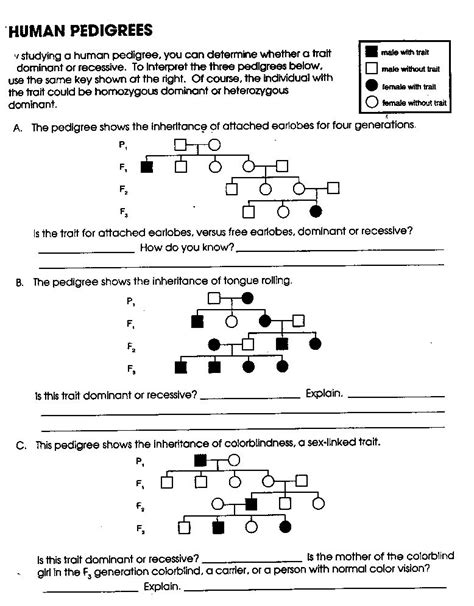 Pedigree Charts Worksheet by Pedigree Charts Worksheet S Answers