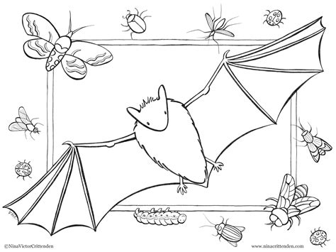 coloring pages baby bat cute baby bat coloring pages