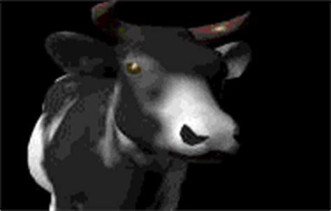 imagenes gif vacas gifs animados gif de animales tierra vacas toros