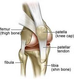 Knee joint anatomy diagram