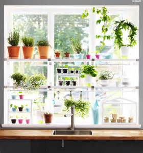 Plant Window Ideas And Tips For Gardening