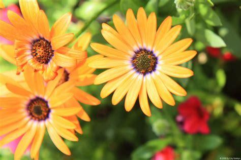 design bunga bunga gambar bunga untuk batik joy studio design gallery