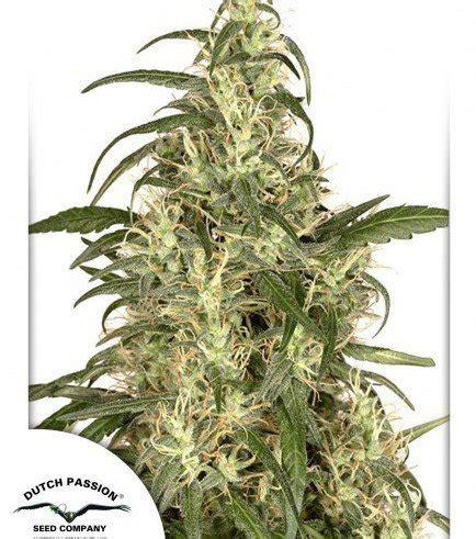 banche semi cannabis skunk 11 zativo