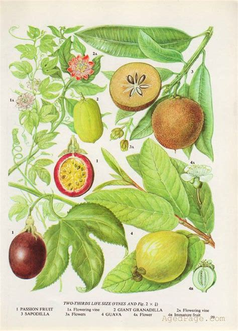 Fruit Kitchen Decor by 1000 Ideas About Fruit Kitchen Decor On