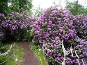 Flowering Garden Shrubs Trees And Shrubs Product Range Trowbridge Garden Centre
