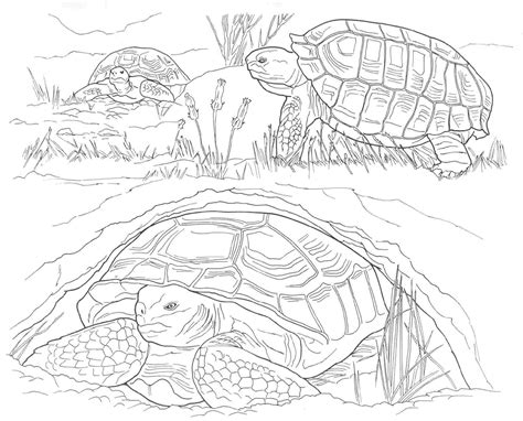 free coloring pages of animals of north america