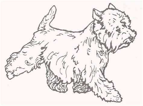 westie coloring pages coloring pages