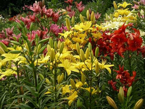 backyard plants and flowers do all plants bloom world of flowering plants