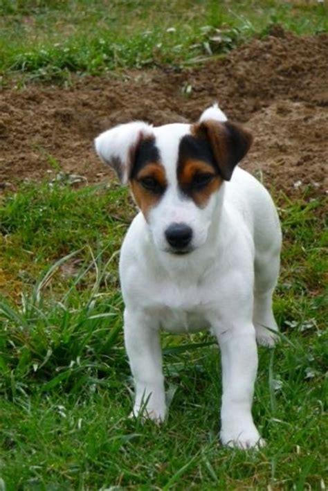 where do they sell slush puppies near me russel puppy stolen near basel forum switzerland