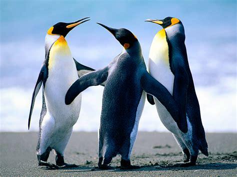 Penguin S penguins habitat population and type penguins