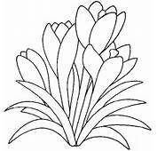 Pflanzen Colouring Pages