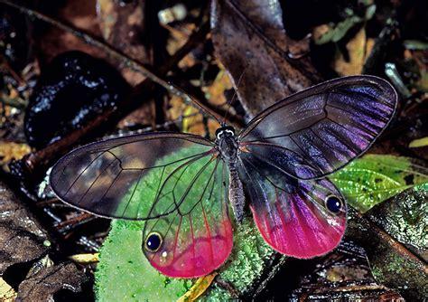 moths of costa rica s rainforest books kaleidoscope of butterflies on monarch