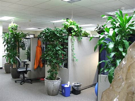 best office plants best plants for an office environment greener ideal