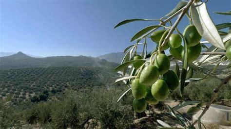 la revolucion exotica del aceite de oliva