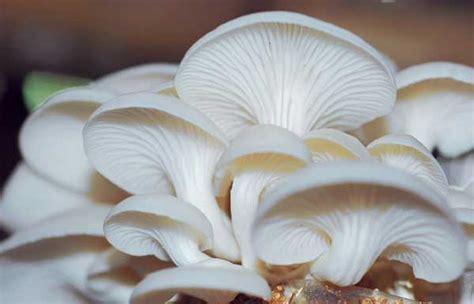 pengertianciriklasifikasi  peran jamur