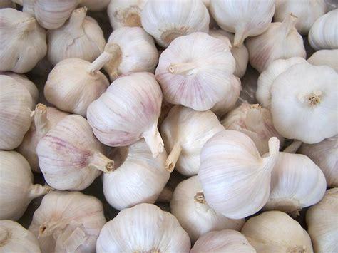ate garlic garlic properties benefits and contraindications