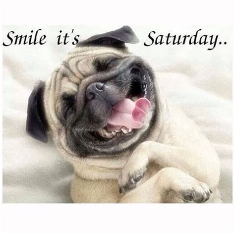 Happy Saturday Meme - samira samsamirooni instagram photos and videos