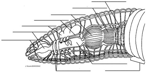 earthworm diagram and label earthworm anatomy and dissection
