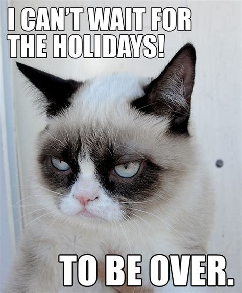 Grump Cat Meme - hate the holidays with the grumpy cat internet meme socialeyezer