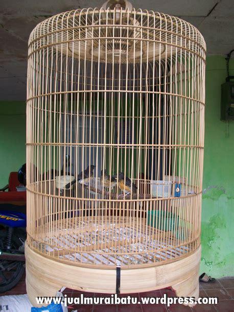 Jual Pakan Burung Di Medan tips menghasilkan anakan murai batu medan berkualitas