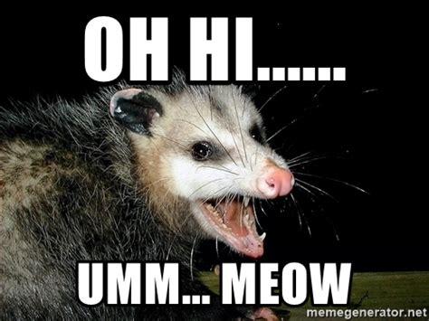 Possum Memes - opossum meme gallery