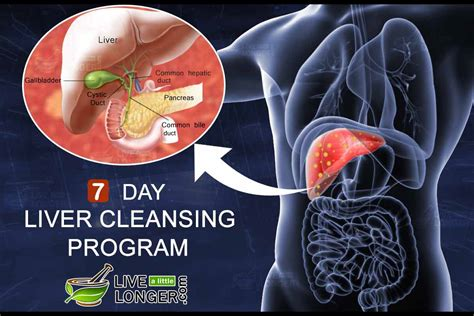 1 Day Liver Detox by Liver Cleansing 7 Day Diet Plan For Complete Detox